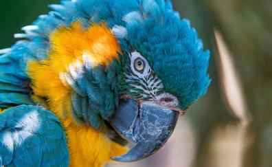 Macaw parrot muzzle close up