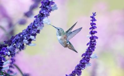 Flight flowers hummingbird