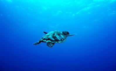 Underwater aquatic animal turtle