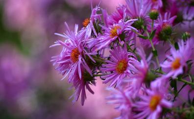 Flower pink flowers blossom blur spring