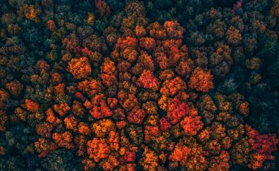 Trees peak, forest, trees, aerial view