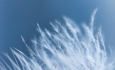 White feathers close up