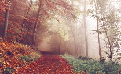 Autumn leaves on path 4k