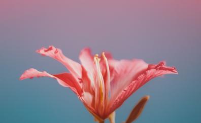 Flower potrait
