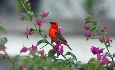 Cute small red bird