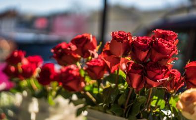 Beautiful roses bud flowers