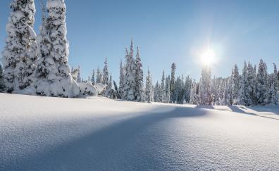 Strathcona provincial park winter pine trees canada