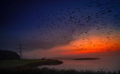 Susnet birds sky coast