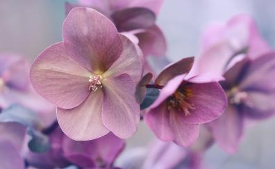 Pink flowers, plants, close up