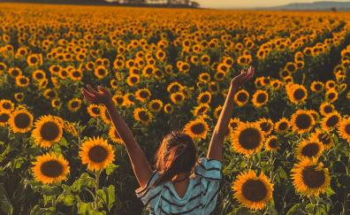 9 Sunflower Hd Wallpapers Desktop Pc Laptop Mac Iphone Ipad Android Mobiles Tablets Windows Phone