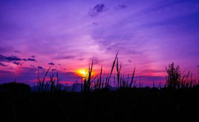 Twilight sunset grass