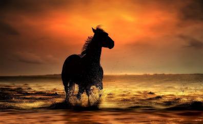 Sunset, coast, sea waves, horse, run