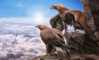 Golden Eagles, birds, clouds
