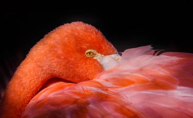 Feathers pink bird flamingo