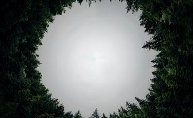 Circle forest trees