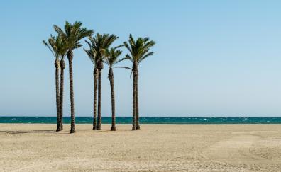 Palm trees beach 5k