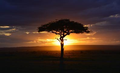 Tree sunset landscape africa