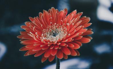 Bloom flower portrait