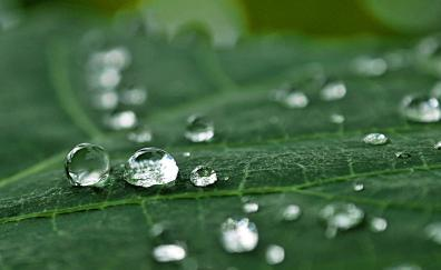 Macro, leaf, dew drops, close up