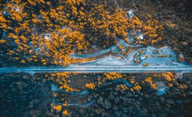 Highway trees aerial view