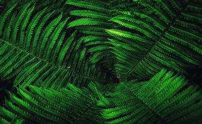 Fern leaves tree branches