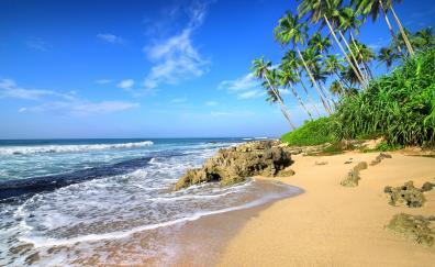 Beach sea waves tropical beach palm tree