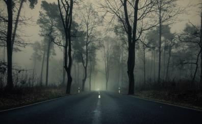 Haze misty day sunrise highway forest