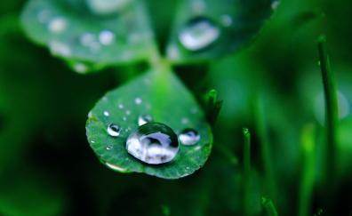Water drop, close up, blur, grass