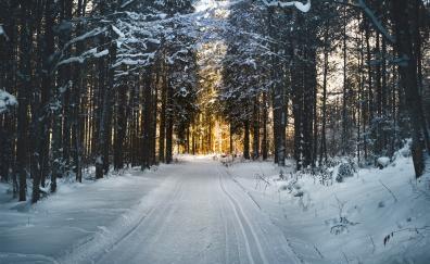 Winter snow road trees 5k