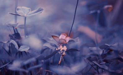 Portrait butterfly