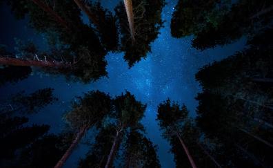 Starry night, nature, sky, trees