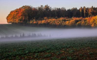 Autumn landscape mist 5k