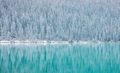 Pine trees winter reflections blue lake 4k