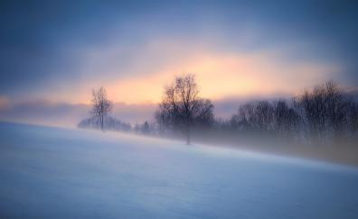 Winter, fog, landscape, nature