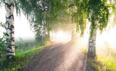 Summer sunlight dirt road trees