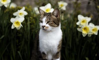 Cat animal pet feline