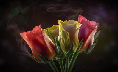 Roses smoke portrait