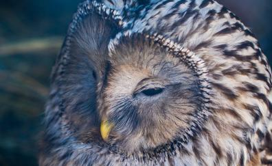 Bird owl muzzle