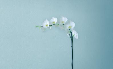 Artificial flowers minimal huawei mediapad m5 stock