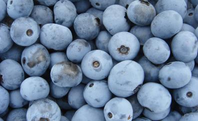 Blueberries, ripen, fruits