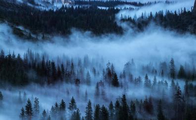 Fog sunrise trees nature