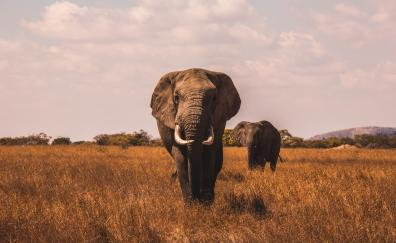 Landscape grass elephant
