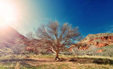 Dry tree desert sunlight 4k 8k