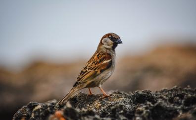 Sparrow bird cute