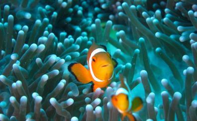 Clownfish underwater aquarium