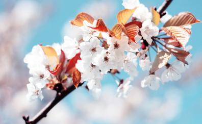 Flowers cherry blossom spring