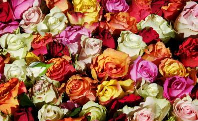 Colorful roses decorations