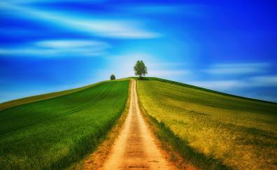 Dirt road, landscape, sunny day, blue sky, tree