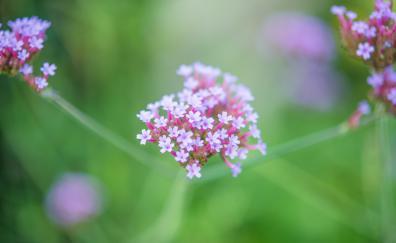 Beautiful, flora, blur, flowers
