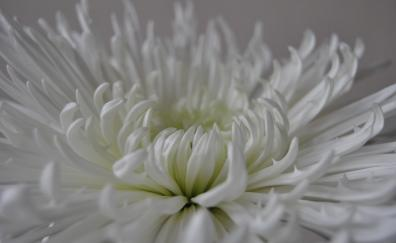 White flower close up petals